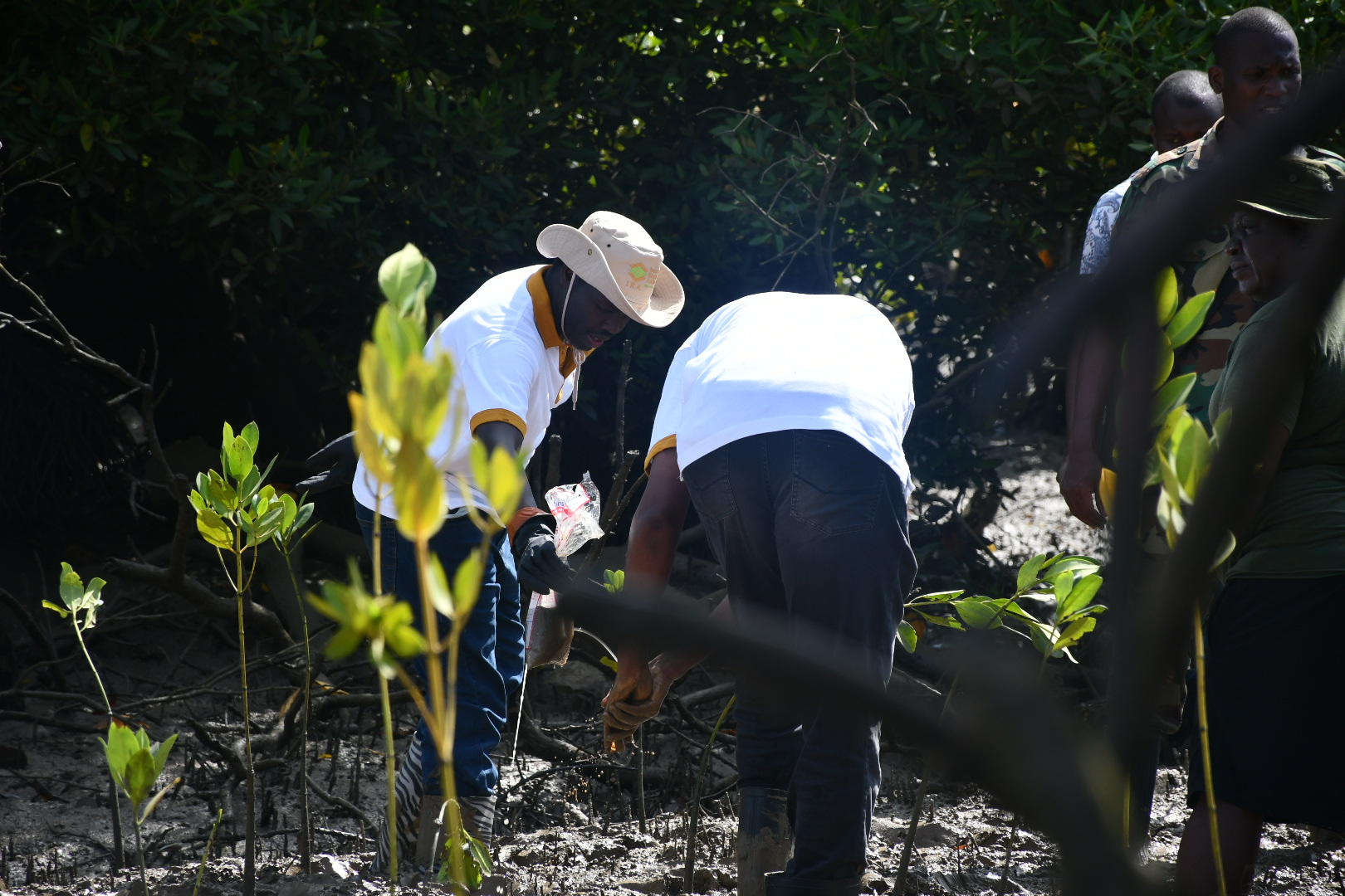 CEO, Mr. Godfrey Kiptum, planting trees at the Big Ship Conservation site, Mikindani, Tudor Creek Mangrove Forest, Mombasa County